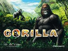 Автомат Gorilla играйте через зеркало казино